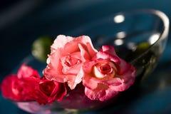 Rosen der Liebe Stockfoto