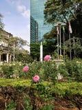 Rosen in der Stadt stockbild