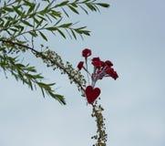 Rosen des kleinen Modells befestigt zu einer Niederlassung Lizenzfreie Stockbilder