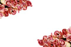 Rosen, die ein Feld bilden Stockfotos