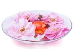 Rosen in einer Glasplatte Stockbild