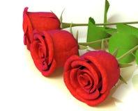 Rosen für große Feiern Stockbilder