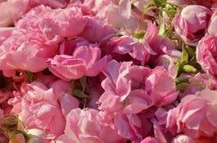 Rosen für rosafarbenes Schmieröl Stockbild