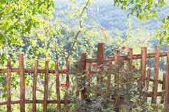 Rosen im Garten und in einem Bretterzaun lizenzfreie stockfotografie