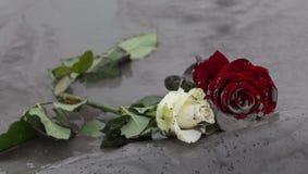 Rosen im Schlamm Lizenzfreie Stockbilder