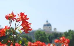 Rosen im Volksgarten, Wien Stockfotos