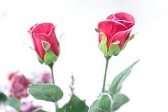 Rosen im Winter lizenzfreie stockbilder