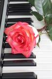 Rosen-Klavier Lizenzfreies Stockfoto