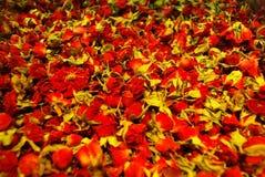 Rosen-Knospentee Knospen von roten Rosen Stockfotografie
