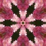 Rosen-Mandala Stockfoto