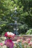 Rosen mit Brunnen bei Merrick Rose Garden Lizenzfreie Stockfotos