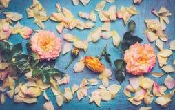 Rosen mit den Blumenblättern auf blauem Hintergrund, Draufsicht Stockfoto