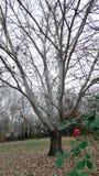 Rosen och trädet Royaltyfri Bild