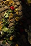 Rosen på den brutna jordningen och hjärtan royaltyfri foto