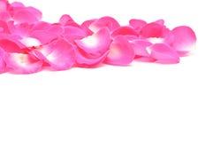 Rosen-Rosa-Blumenblätter schließen Lizenzfreie Stockfotografie