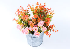 Rosen-Rosaplastik in einem Zinkeimer, weißer Hintergrund Stockbilder