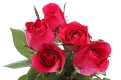Rosen-rote Blume mit Ihnen. Stockbild