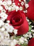 Rosen sind rot Stockfotografie