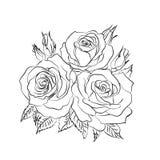 Rosen-Skizze auf weißem Hintergrund Stockfotografie