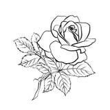 Rosen-Skizze auf weißem Hintergrund Stockfoto