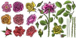 Rosen stellten Erbauer ein Blumensammlung DIY Mischung f der wilden Blumen stock abbildung