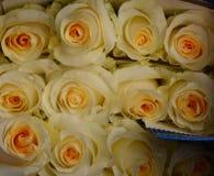 Rosen-sumer Blume für Hintergrund stockfotos