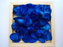 Rosen und blaue Blumenblätter Stockfoto