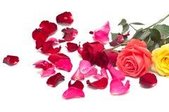 Rosen und Blumenblätter Lizenzfreie Stockfotos