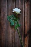 Rosen-und Hochzeitsringe Stockbild