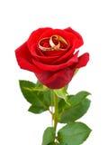 Rosen-und Hochzeitsringe Stockfotos