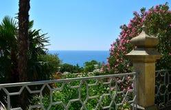 Rosen und Palmen auf dem Hintergrund des Meeres Lizenzfreie Stockfotos
