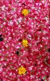 Rosen und Ringelblumen für Verkauf Lizenzfreies Stockbild