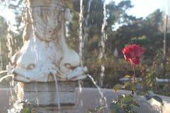 Rosen- und Wasserbrunnenhintergrund lizenzfreie stockbilder