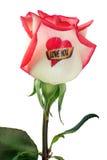 Rosen-Valentinsgruß stockbild