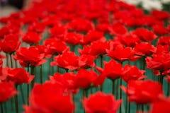 Rosen-Valentinsgrußtag Lizenzfreies Stockbild