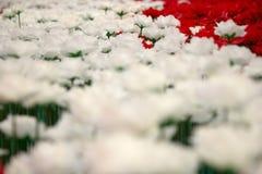 Rosen-Valentinsgrußtag Stockfotografie