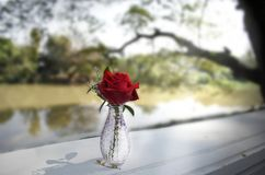 Rosen-Vase nahe dem Fluss Lizenzfreies Stockbild