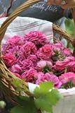Rosen vom Garten Stockbilder