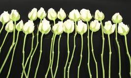 Rosen von Romance Stockbilder