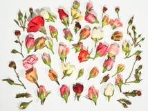 Rosen von Romance Lizenzfreies Stockbild