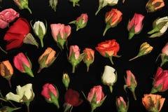 Rosen von Romance Stockfoto