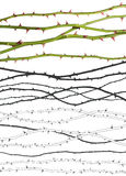 Rosen-Zeilen mit Ausschnittspfaden lizenzfreie stockfotos