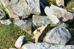 Rosenbeet auf Croagh Patrick Ireland Stockfotos