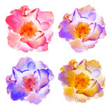 Rosenblumen Set der vektorabbildung Stockfoto