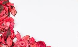 Rosenblumenblätter auf Weiß lokalisiertem Hintergrund Lieben Sie Schablone für Valentinsgrußtagesrosablumenecke Nichts herein in  Lizenzfreie Stockbilder