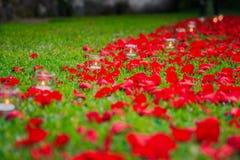 Rosenblumenblätter und candels Stockfotos