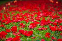 Rosenblumenblätter und -kerzen, die einen romantischen Weg herstellen Lizenzfreie Stockbilder