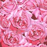 Rosenblumenblüte Lizenzfreies Stockfoto