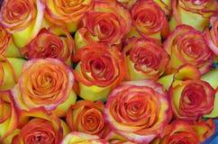 Rosenblumenstraußhintergrund Stockfoto