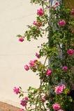 Rosenbusch auf Tür Stockbild